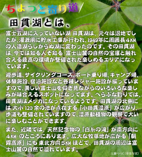 ちょっと寄り道 意外と人気のある田貫湖からの富士.jpg
