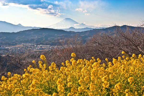 二宮吾妻山の富士 09011203.jpg