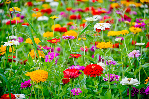 山中湖 花の都公園 07082616.jpg