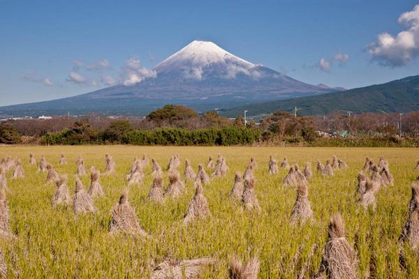 富士田園 桧から 09110315.jpg