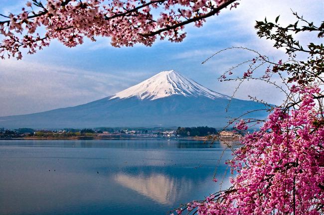 河口湖の富士と桜 09041918.jpg