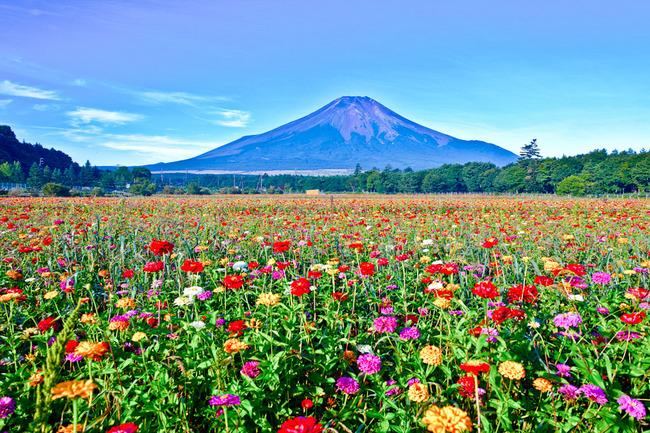 花の都公園の百日草 10082901.jpg