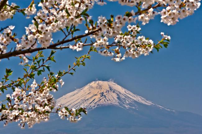 パノラマ台の富士05042918.jpg